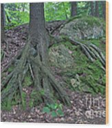 Tree Growing Over A Rock Wood Print by Ted Kinsman