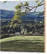 Tree In A Field, Great Sugar Loaf Wood Print