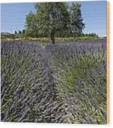 Tree In A Field Of Lavender. Provence Wood Print