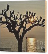 Tree In A Foggy Sunset Wood Print