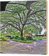Tree In Church Yard Wood Print
