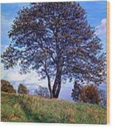 Tree In  English Park Wood Print