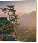 Tree In Morning Llght In Saxon Switzerland Wood Print
