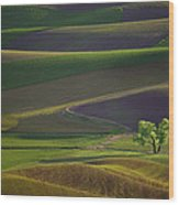 Tree In The Palouse Wood Print