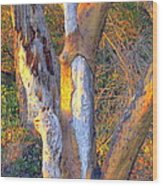 Tree In The Sunset Wood Print