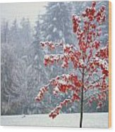 Tree In The Winter Wood Print by Natural Selection Craig Tuttle