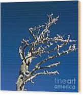 Tree In Winter Against A Blue Sky Wood Print