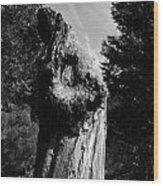 Tree Key Hole 1 Wood Print