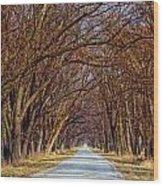 Tree Lined Lane Wood Print