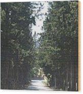 Tree Lined Street Wood Print