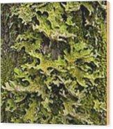 Tree Lungwort (lobaria Pulmonaria) Wood Print