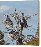Tree Of Florida Cormorants Wood Print