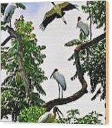 Tree Of Storks  Wood Print