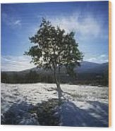 Tree On A Snow Covered Landscape Wood Print