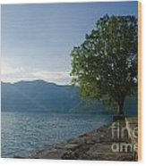 Tree On The Lake Front Wood Print