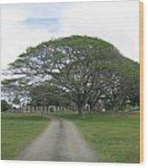 Tree Over Ruins Wood Print