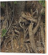 Tree Root's In The Creek Bed Wood Print
