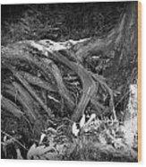 Tree Roots1 Wood Print
