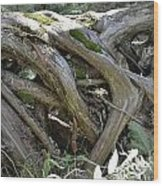 Tree Roots2 Wood Print