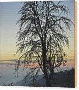 Tree Silhouette At Sunset 2 Wood Print by Bruno Santoro