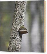 Tree Step Wood Print