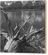 Tree Stump On The Shore Of Lewis Lake At Yellowstone Wood Print