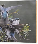 Tree Swallow - Standing Guard Wood Print
