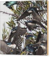 Tree Swallow - All Swallowed Up Wood Print