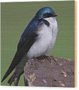 Tree Swallow Wood Print