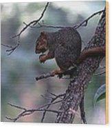 Tree Top Nut Wood Print