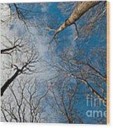 Tree Tops On The Wild Turkey Trail Wood Print