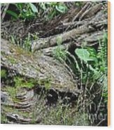 Tree Trunk And Ferns Wood Print