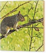 Tree Visitor Wood Print