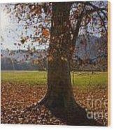 Tree With Autumn Leaves Wood Print
