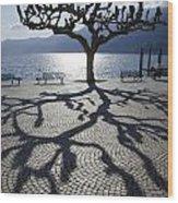 Tree With Shadow Wood Print