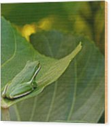 Treefrog Resting Wood Print