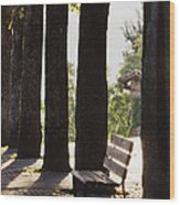 Trees And Bench Wood Print