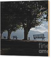 Trees And Benches Wood Print