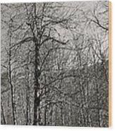 Trees And Hillside Wood Print