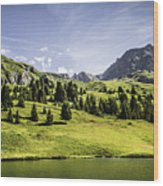 Trees And Lake In Grassy Rural Landscape Wood Print