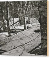 Trees And Snow In April Wood Print