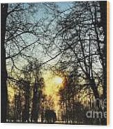Trees And Sun In A Foggy Day Wood Print
