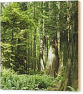Trees At Cathedral Grove Wood Print