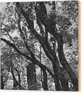 Trees Beautiful Trees Wood Print