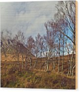 Trees Below Stob Dearg Wood Print by Gary Eason