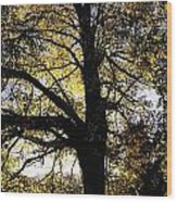 Trees During Autumn Wood Print