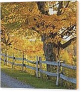 Trees In Autumn Colours And A Fence Wood Print