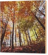 Trees In Autumn Wood Print