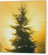 Trees In Fog At Sunrise Wood Print