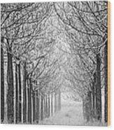Trees In Lines Wood Print